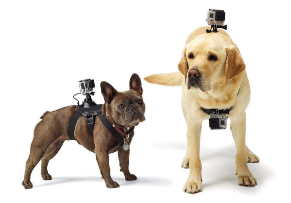 The GoPro Fetch - GoPro dog mount