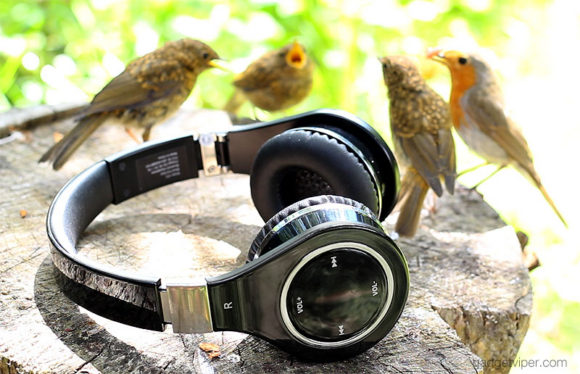 A family of Robins discussing the pro's and cons of the Mixcder Bluetooth headphones